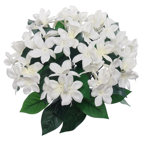 "12"" STEPHANOTIS BUSH"
