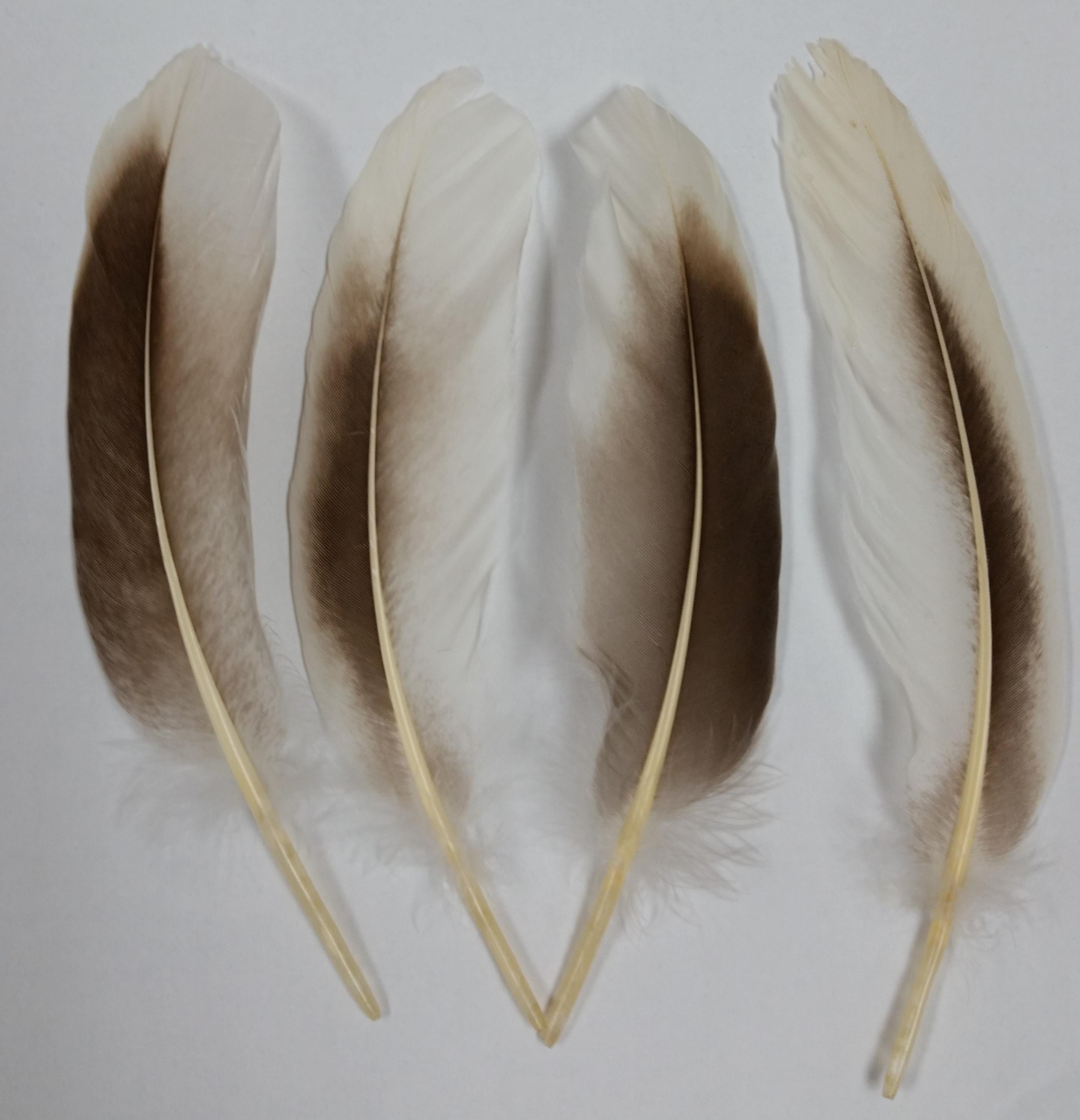 Goose Feathers