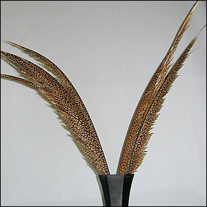 Pheasant Feathers