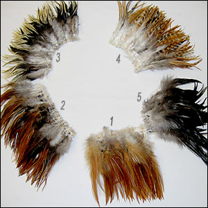 Rooster Feathers