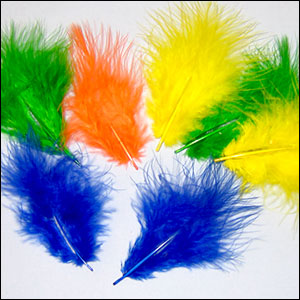 Turkey Feathers