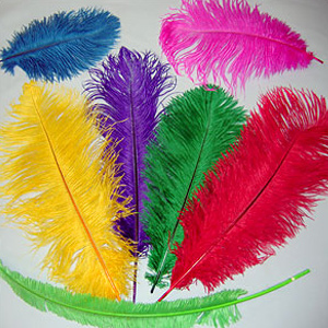 Wholesale Ostrich Feathers